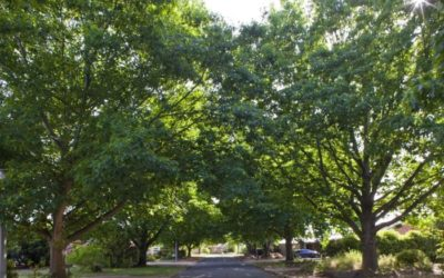 Media Release: Opportunity to strengthen Tree Protection Act