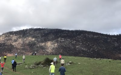 Namadgi extensively damaged, but showing pockets of hope